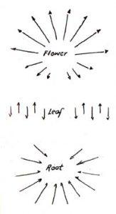 Bild: Wirkung von Pfanzenkräften